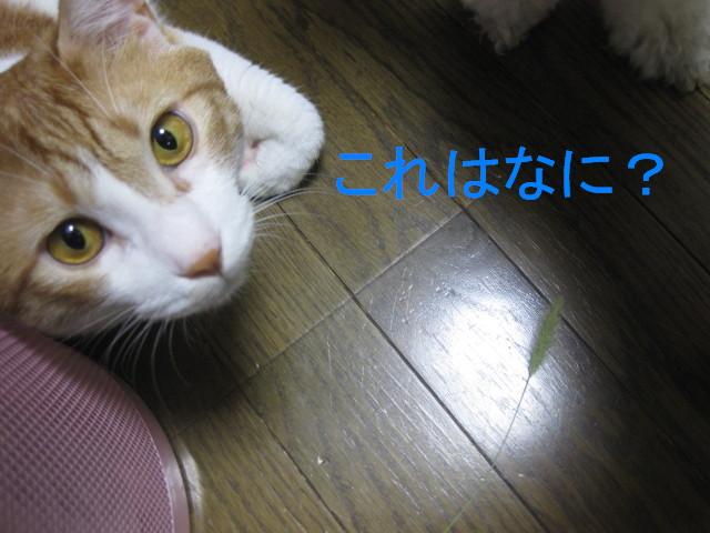 Img_15631