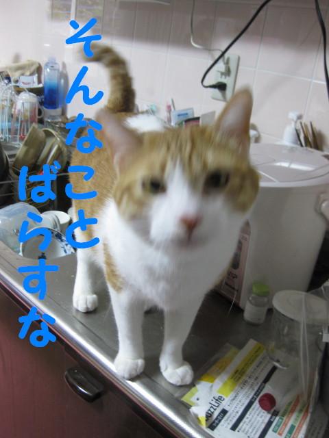 Img_34471_2
