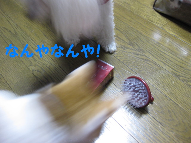 Img_39021