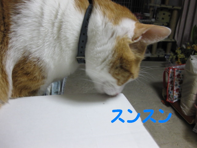 Img_48441_2