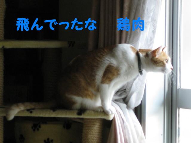 Img_53071