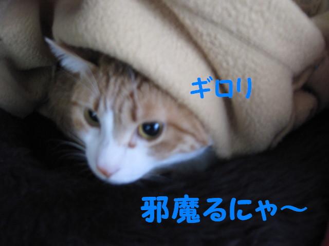Img_55961