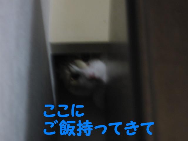 Img_62711