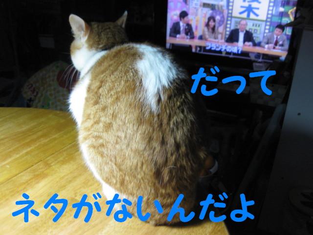 Img_26251