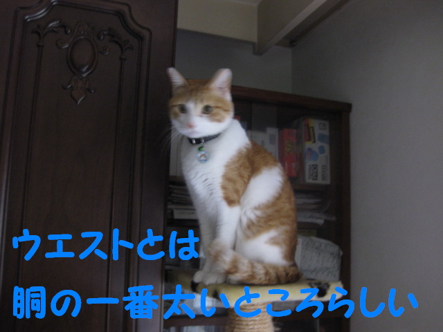 Img_26421