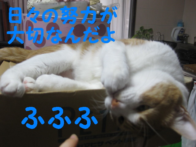 Img_48101