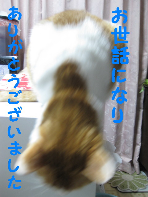 Img_57211