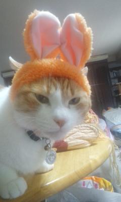 猫ウサギ その1
